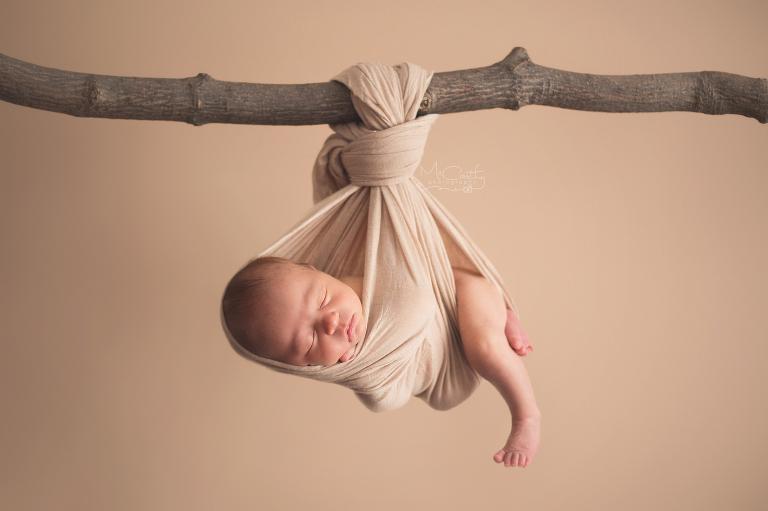 newborn photographer poses baby in a tree branch